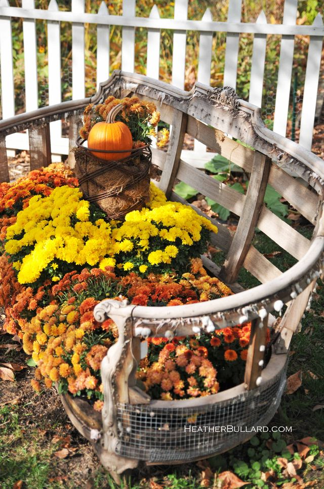 fall mums - 20 things I love about fall