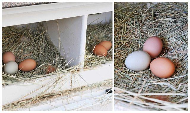 Eggboxcoll