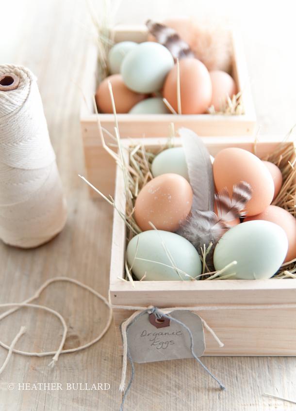 Heatherbullard_eggs-10