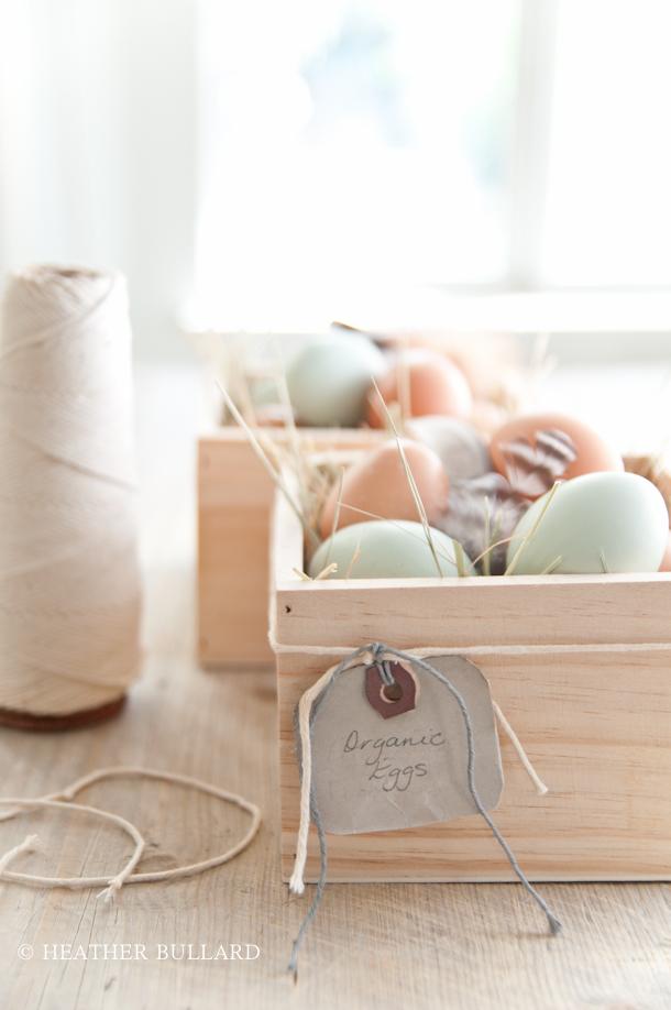 Heatherbullard_eggs-9